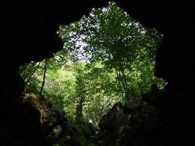 溶岩樹型.JPG