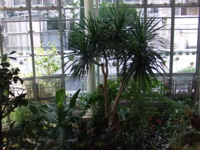植物センター館内