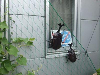 植物園Entranceカブトムシ