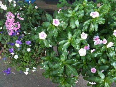 fiori ebisu centre